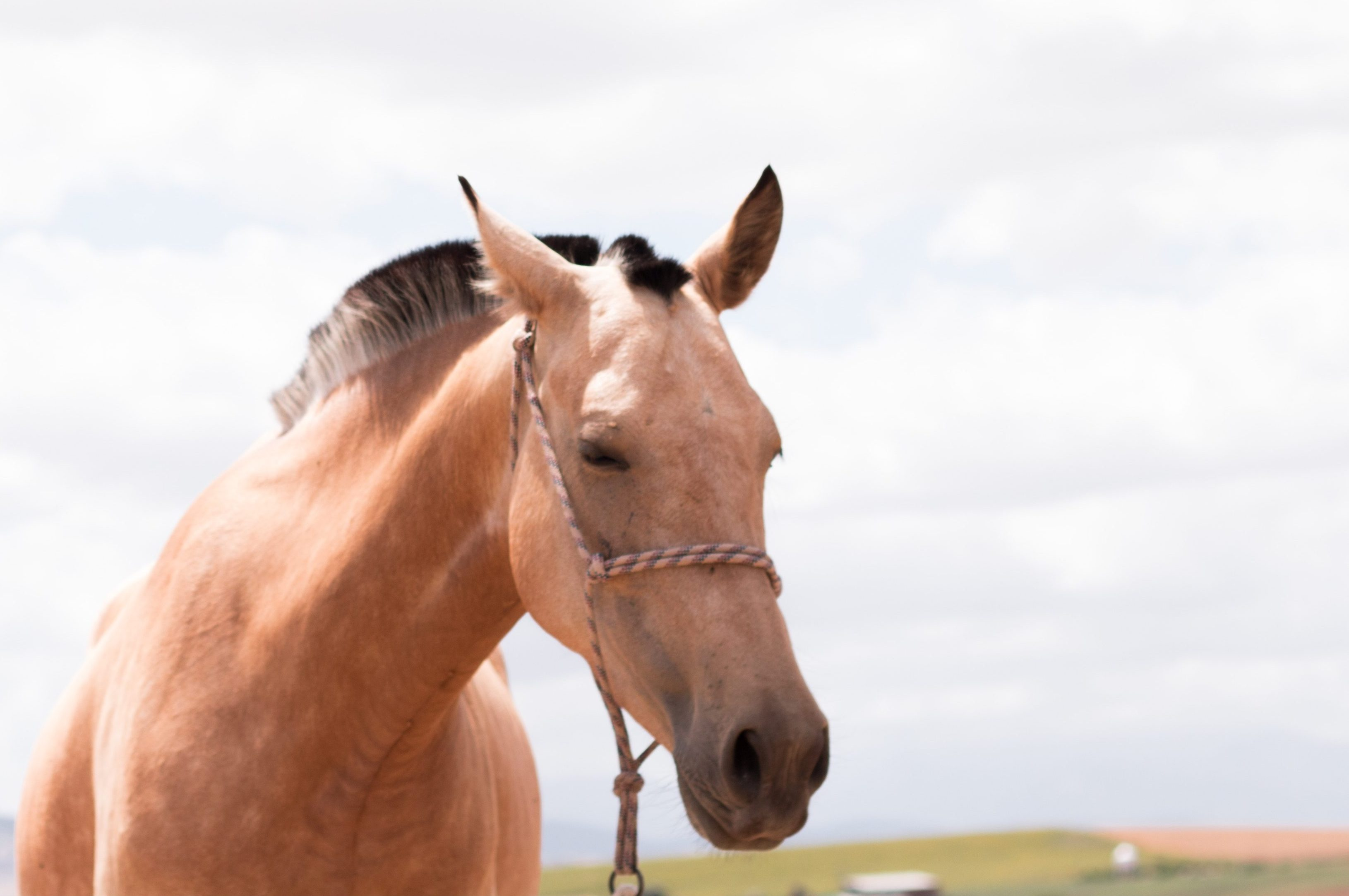 Equine-assisted therapy offers survivors a low-stress, yet powerful channel to heal from trauma.